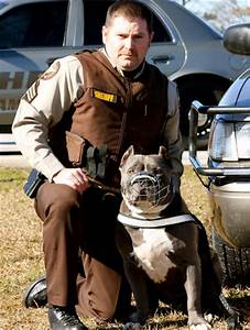 Pitbull Dog Pictures - Images and Photos of American ...