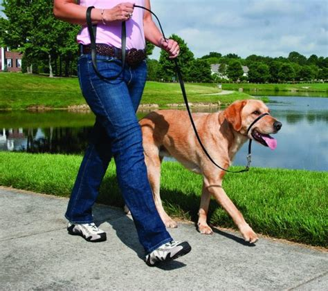 guide  buying   dog leash rover blog