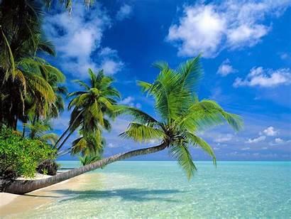 Beach Wallpapers Palm Tree Desktop Beaches Trees