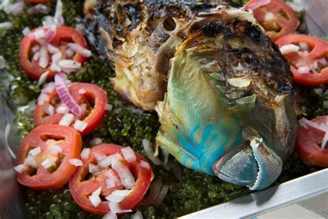 cuisiner pour chien ca se mange un poisson perroquet