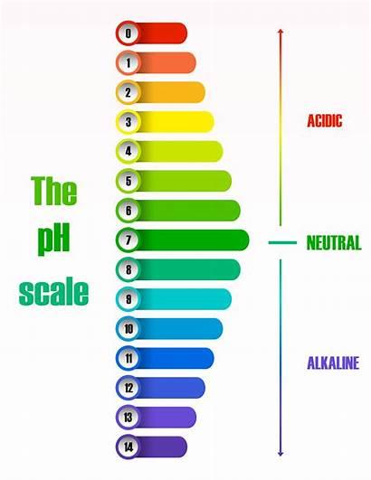 Ph Scale Diagram Vector Science Freepik Clipart