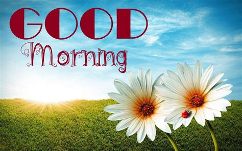 Images For Good Morning 30 Free Download New 2017