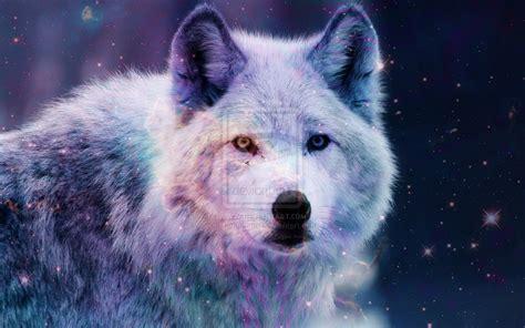 Galaxy Wolf Wallpaper Hd by Galaxy Wolf Wallpaper Wallpapersafari