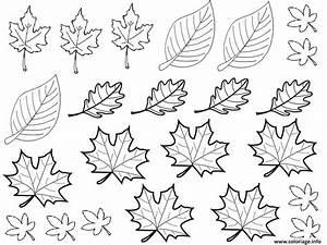 Feuilles D Automne à Imprimer : coloriage dessin automne feuilles dessin ~ Nature-et-papiers.com Idées de Décoration