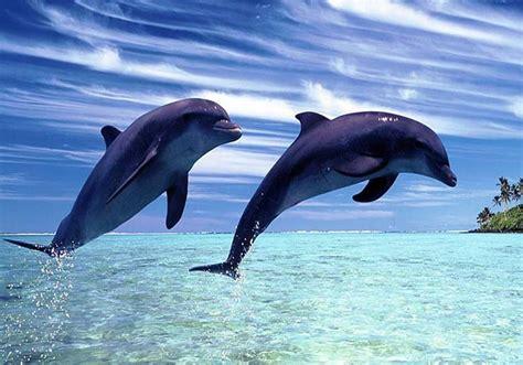 wisata ikan lumba lumba  lovina lautan  air