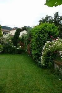 plus de 1000 idees a propos de arbustes sur pinterest With superior amenagement jardin exterieur mediterraneen 1 plantes et amenagement jardin mediterraneen 79 idees