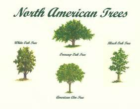 american trees number 2 by michael vigliotti