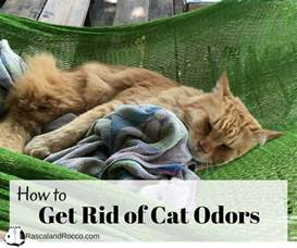 get rid of cat urine smell get rid of cat odor forever rascal and