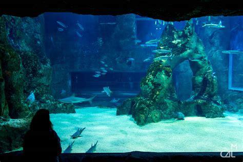 aquarium de biarritz devant le bassin aux requins mon chat aime la photo