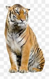 Tiger PNG Images, Download 5,183 PNG Resources with