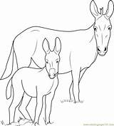 Donkey Coloring Pages Ponui Head Template Printable Coloringpages101 Pdf Sketch sketch template