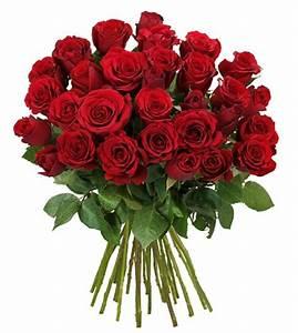 Begleitpflanzen Für Rosen : 25 rote rosen f r 17 94 bei blumeideal ~ Lizthompson.info Haus und Dekorationen