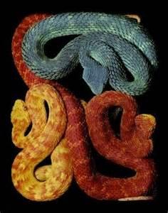 Reptile Viper Snake