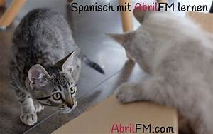 Toilette Auf Spanisch : was machst du am wochenende spanisch ostseesuche com ~ Buech-reservation.com Haus und Dekorationen