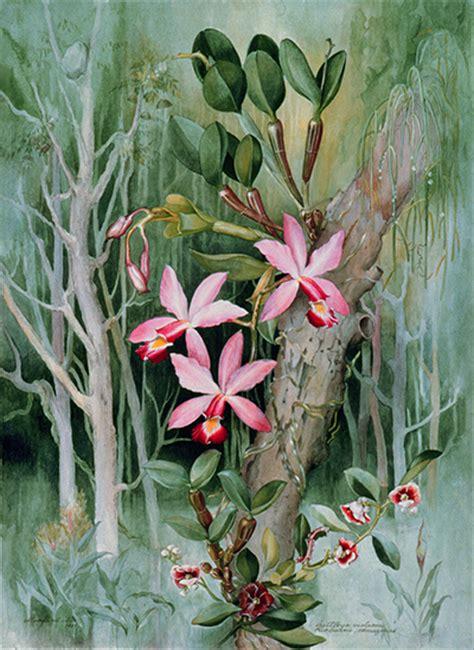 flowering amazon margaret mee paintings