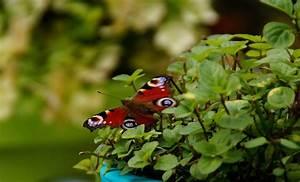 Exotische Früchte Im Eigenen Garten : artenschutz im garten ist artenvielfalt f r jedermann ~ Lizthompson.info Haus und Dekorationen