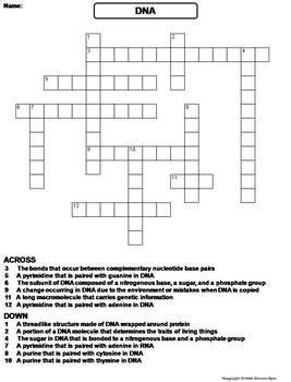 dna structure  function worksheet crossword puzzle