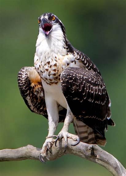 Hawks Birds Wallpapers Hawk Bird Cave Allwallpaper