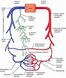 Medicine Structure And Function  U0026gt  Becker  U0026gt  Flashcards  U0026gt  4
