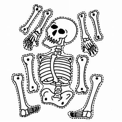 Bones Printable Template Paper Teach Ways Skeleton