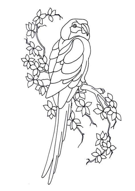Owl Pumpkin Carving Templates Easy by Coloriage Perroquet Branche Sur Hugolescargot Com