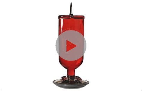 Perky-pet Antique Red Glass Humming Bird Feeder-8109-2 Hummingbird Red Antique Bottle Feeder 16 Oz Capacity Motorcycle Parts Mini Cooper For Sale Silver Necklace Bakery Anime Episode 1 Shower Fixtures Sound Lab Av 25 Dt Brass Wall Sconce