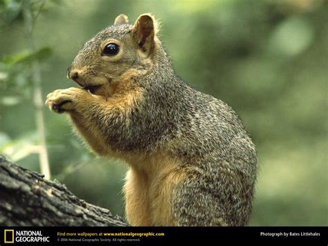 National Geographic Animal Wallpapers - national geographic background wallpaper animals