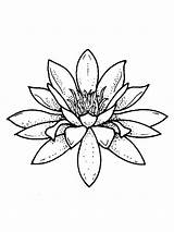 Lily Coloring Water Pages Flower Flowers Colors Recommended sketch template