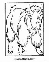 Goat Mountain Coloring Animals Sheet sketch template