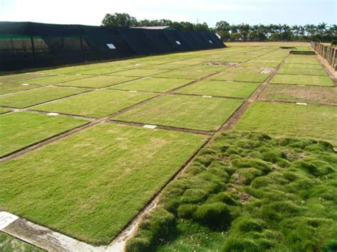different turf types turf tips on how to lay turf gold coast turf supply