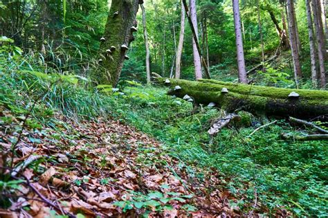 Pilz Garten Braun by Toadstool Stockbild Bild Abschlu 223 Moos Pilz Garten
