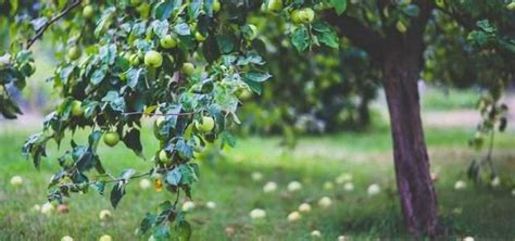 تفسير الغثيان في المنام للمتزوجة. Agriculture Blog: الزراعة في المنام لابن سيرين