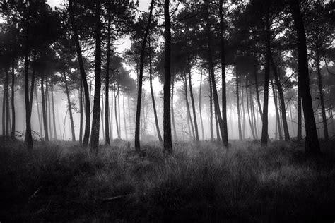 photo noir  blanc bretagne achat vente  dart