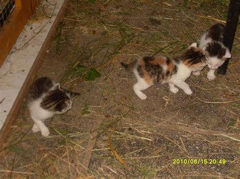 Zu Verschenken by Tieranzeigen Katzenbaby Kleinanzeigen
