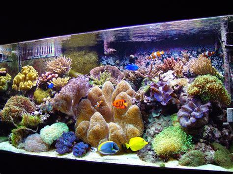 salt water fish tank freshwater aquarium fish tanks