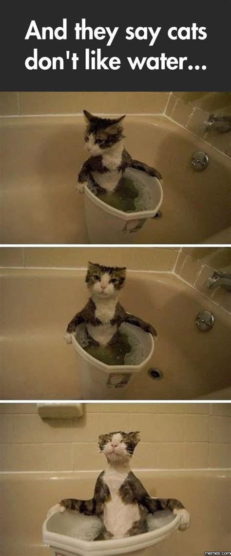water cats cat they funny say don bath memes meme lol very humor picdump daily dont peculiar cute ever likes