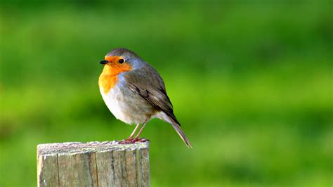 Animals And Birds Wallpaper - bird desktop wallpapers free on latoro