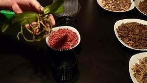 Orchideen Umtopfen Video : orchideen pflege tipps folge 7 umtopfen in ein orchitop ~ Watch28wear.com Haus und Dekorationen