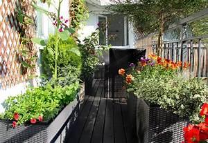 Sichtschutz Mit Pflanzen : balkon sichtschutz aus pflanzen welche pflanzen geeignet ~ Michelbontemps.com Haus und Dekorationen