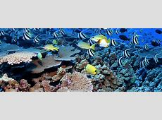 What ocean basin has the most corals?