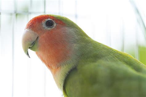 important things to consider before buying a bird