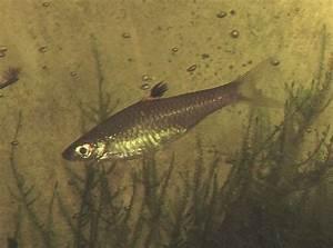Co2 Aquarium Berechnen : augenfleckb rbling aqua ~ Themetempest.com Abrechnung