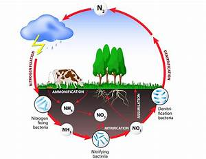 Nutrient Cycling And Energy Flow In Ecosystems