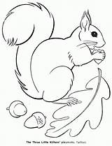 Squirrel Coloring Template Colouring Printable Pages Squirrels Autumn Google Animal Drawing Fall Kittens Three Books Sheets Kleurplaten Herfst Crafts Para sketch template