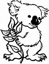Koala Coloring Bear Pages Panda Colouring Clipart Koalas Bears Printable Sheet These sketch template