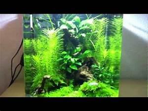 Aquarium Einrichten 60l : 20l dennerle nano cube einrichten 5 gallon nano tank ~ Michelbontemps.com Haus und Dekorationen