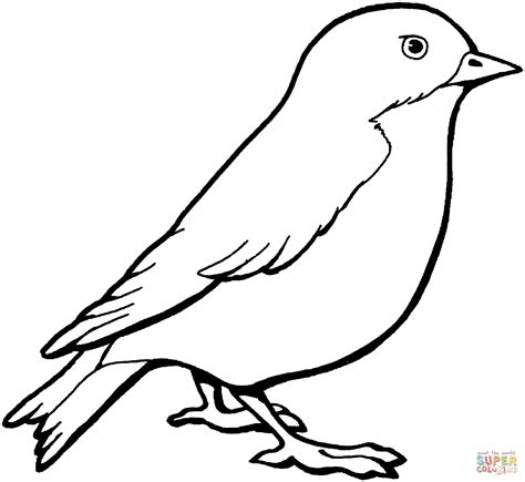 sparrow clipart black and white sparrow coloring page free printable coloring pages