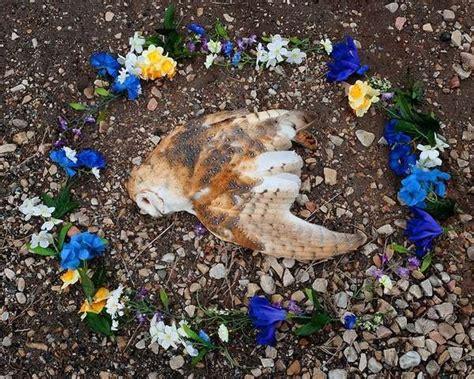 memory ls for deceased roadkill memorial photography memorials for deceased