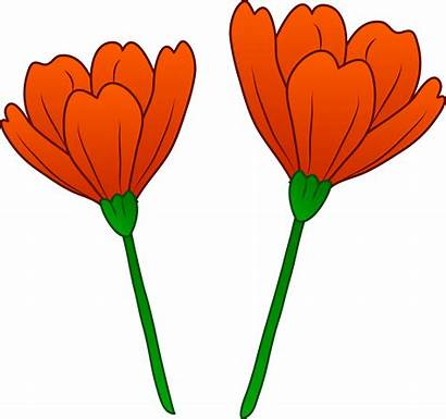 Poppy Clip Flower Clipart Poppies California Cliparts