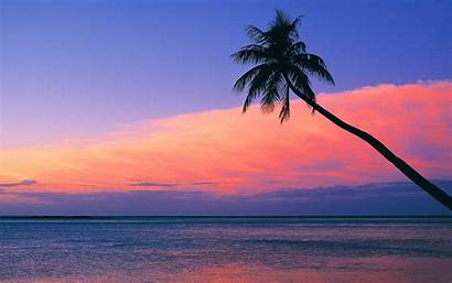 Sunset Beach Pink Backgrounds Wallpapers Beaches Sunsets